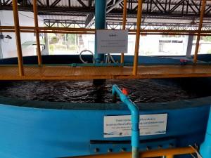 06-ถังเลี้ยงปลานิลความหนาแน่นสูงระบบน้ำหมุนเวียน