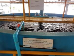07-ถังเลี้ยงปลานิลความหนาแน่นสูงระบบน้ำหมุนเวียน
