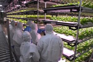 04-เข้าเยี่ยมชม Plant Factory ของบริษัท 808 Factory (4)