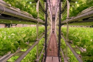 05-เข้าเยี่ยมชม Plant Factory ของบริษัท 808 Factory (5)
